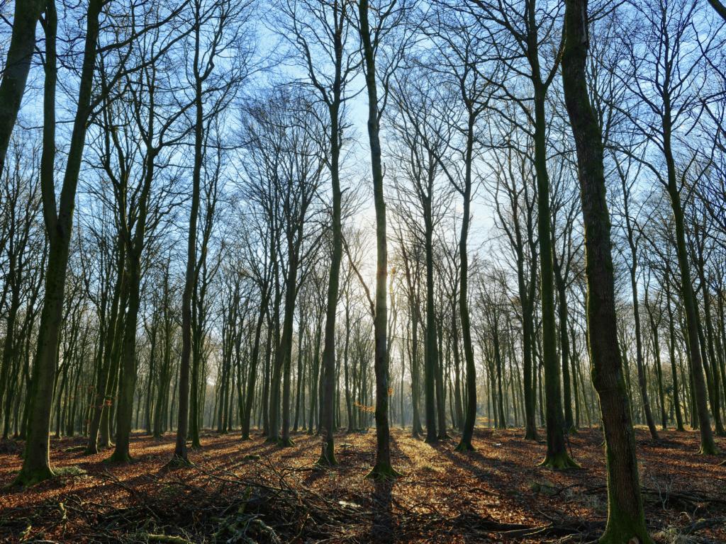 Cranborne Droves Way Walk